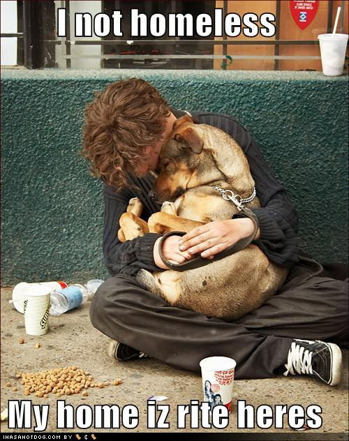 funny-dog-pictures-homeless-hug